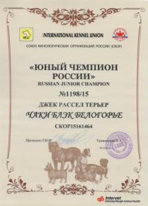 кобель джек рассел Юный Чемпион России