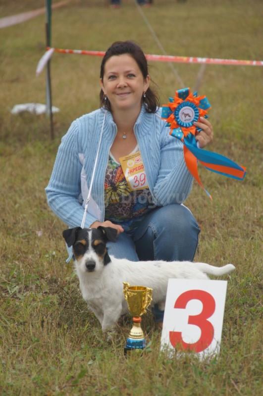 Выставка собак Тула 2015: Чаки Блэк Белогорье