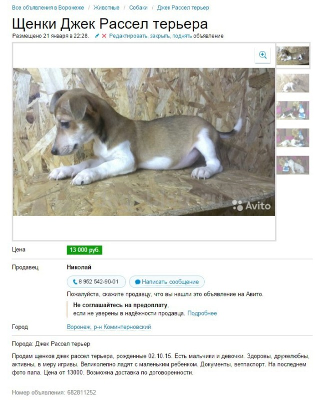 каких щенков не стоит покупать
