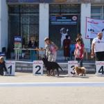 Выставка собак Курск