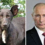 Собаки похожие на…