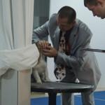Джек рассел шоу 2015: эксперт Александр Опель смотрит зубы собаки