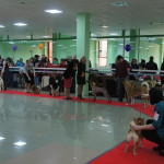Выставка собак 2016 РКФ Белгород