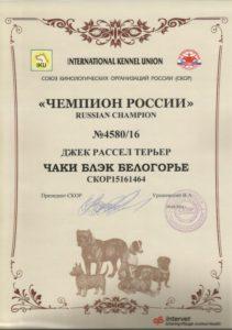 кобель джек рассел Чемпион России