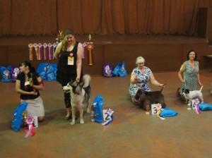 Выставка собак Тула 2015