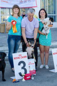 Выставка собак Курск 2015