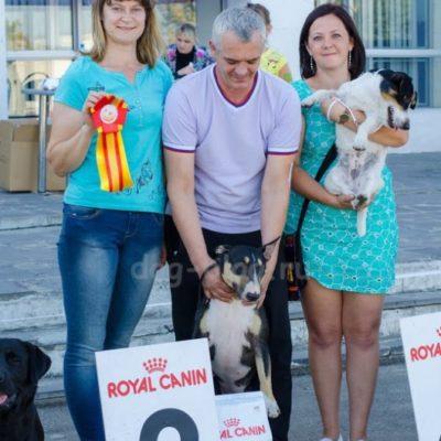 Выставка собак Курс 2015