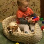 Лежанки для собак
