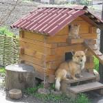 собачьи будки фото