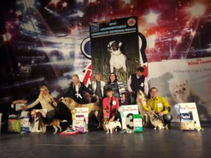 Выставка собак Курск 2016