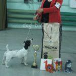 Выставка собак IKU Минск 4 июня 2016г