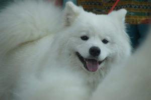 Выставка собак в Минске