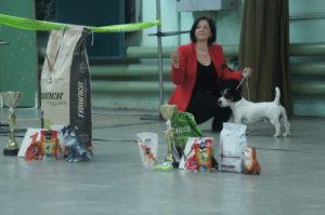 Лучшая Собака Выставки в Минске 2016 - Чаки Блэк
