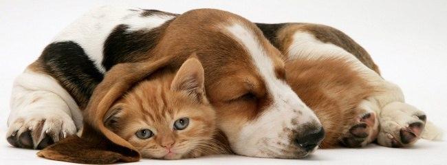 прикольные фото кошек и собак