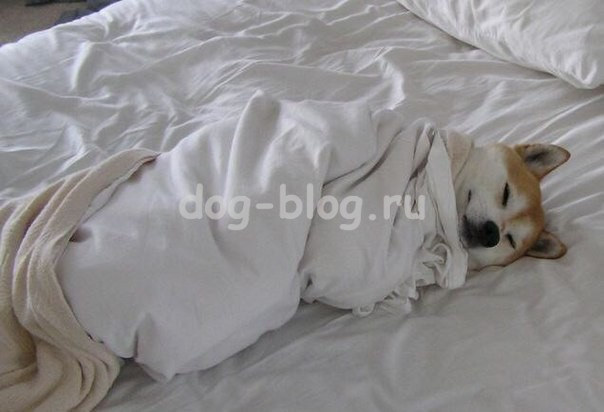 смешная спящая собака