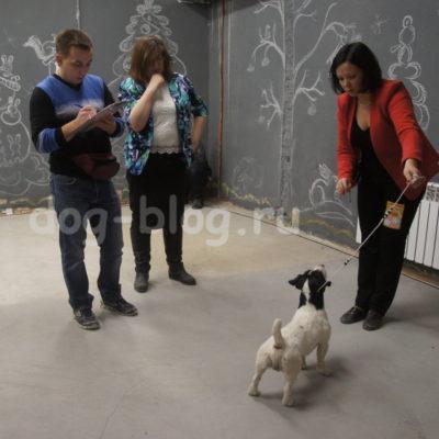 Выставка собак Тула 2016