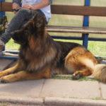 выставка собак в Польше
