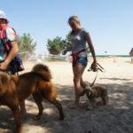 послушание собаки - дрессировка Белгород