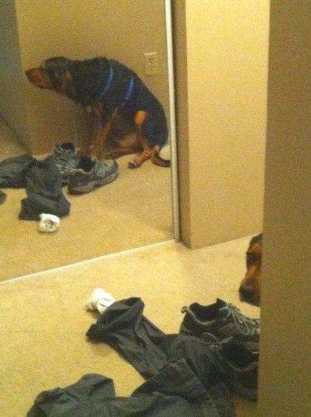 собака прячется
