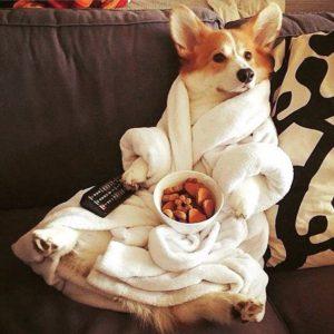 забавное фото собаки