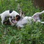 30 ноября — Всемирный День Домашних Животных