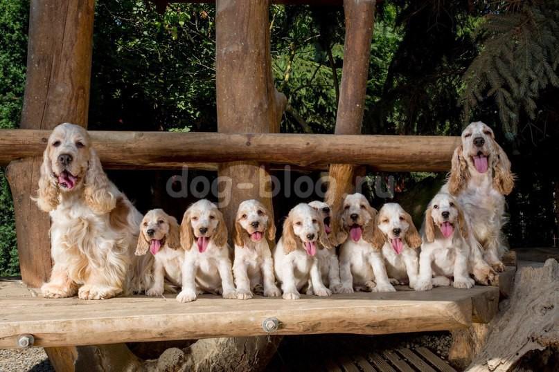 много собак фото