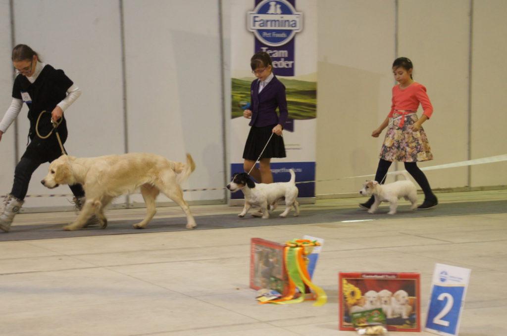 В белгороде выставка собак