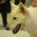 выставка собак Белгород