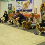 выставка собак Белгоро