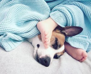 щенок джек рассел терьера и ребёнок спят
