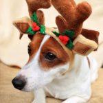 фото собаки с рогами