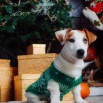 собака с новогодними подарками