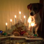 собака с новогодними свечами