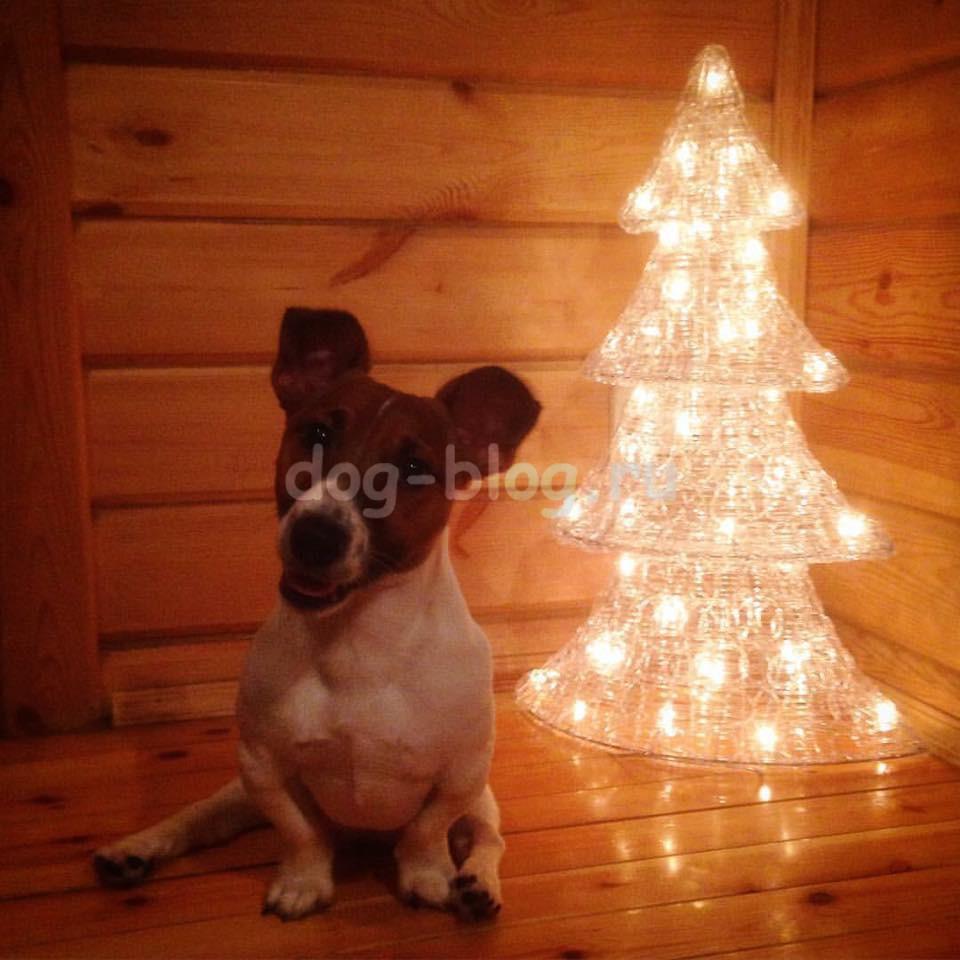 собака под ёлкой