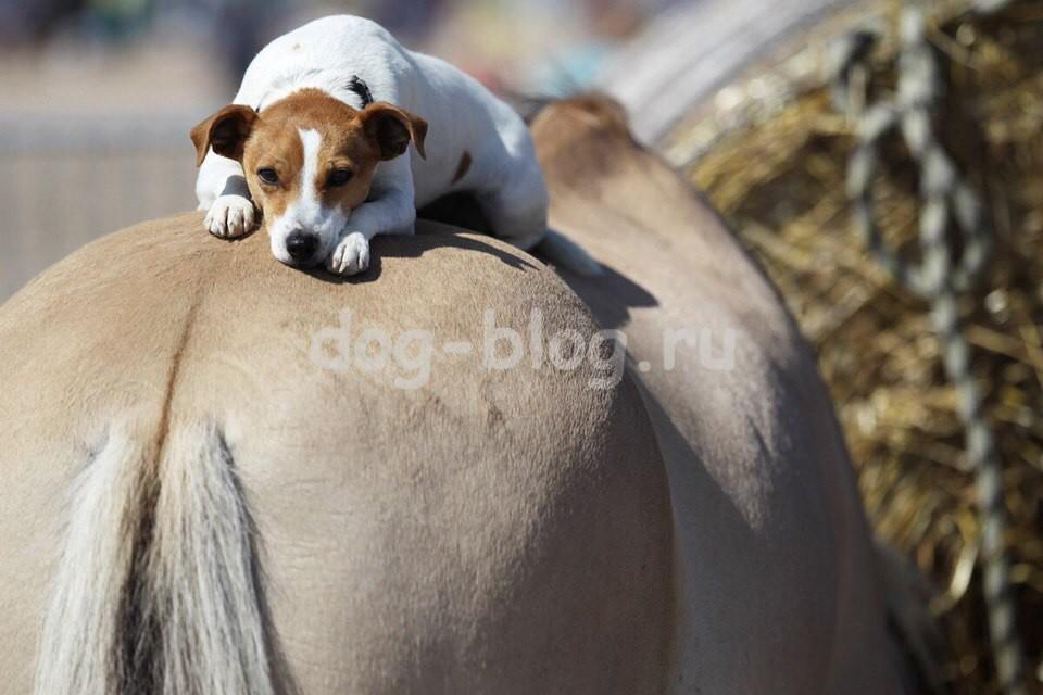 джек и конь