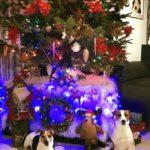 новогодняя ёлка и два джек рассела