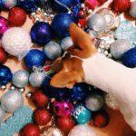 новогодняя ёлка и джек рассел
