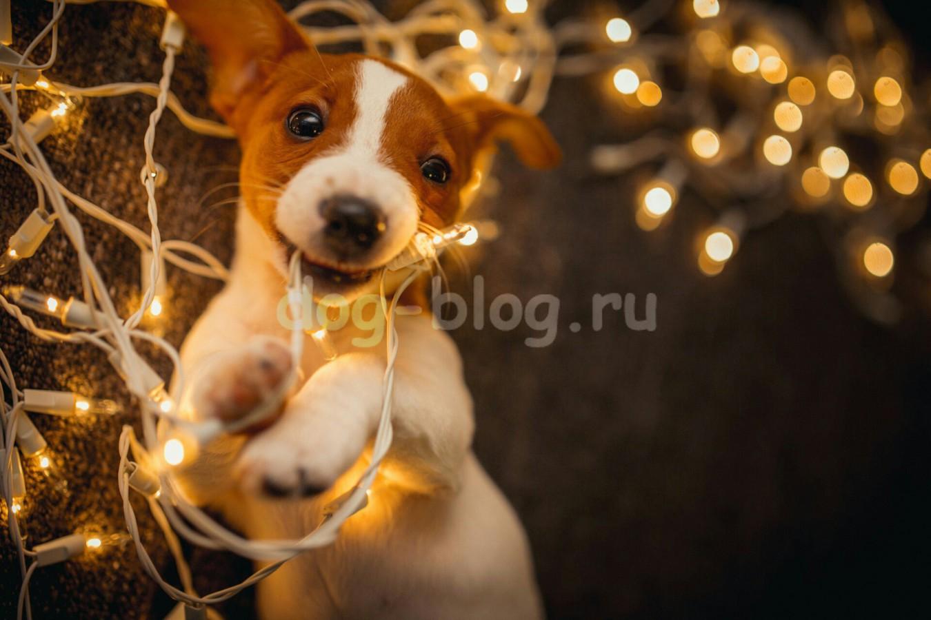 щенок с гирляндой