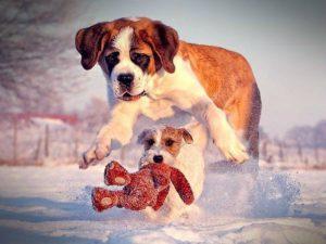 джек играет с большой собакой