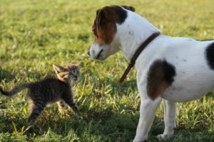 щенок джека и котёнок