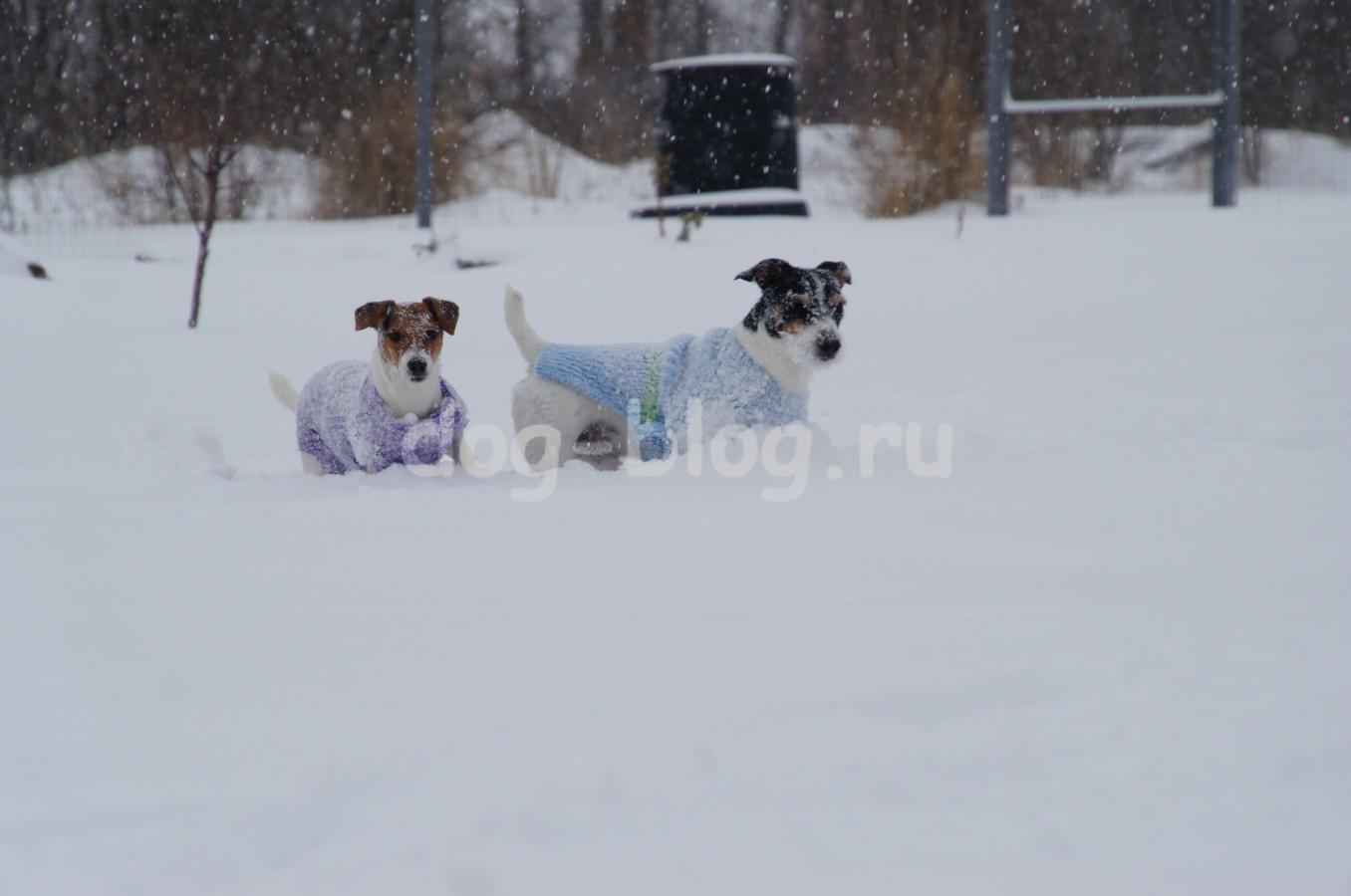 собаки зимой фото