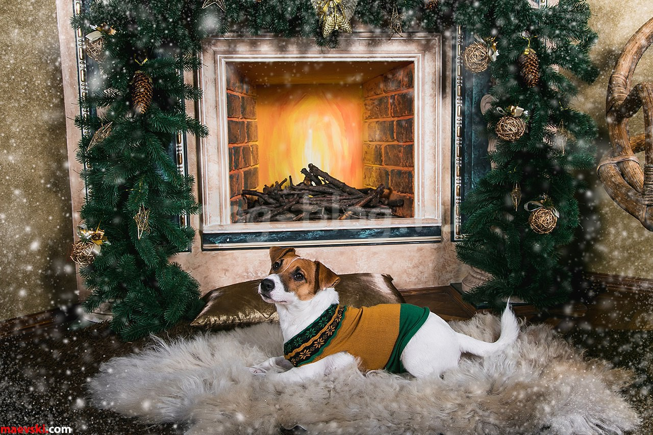 новогодние фото с собакой