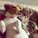 джек и кот
