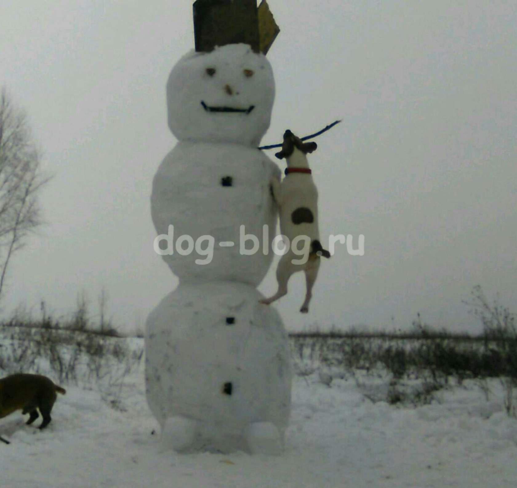 джек рассел и снеговик