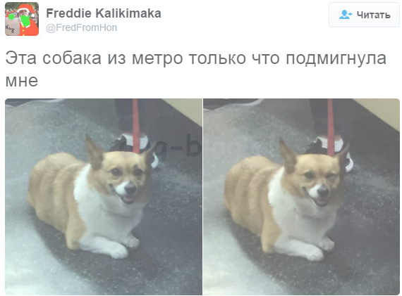 лучшие собачьи твиты 2016 года