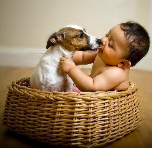 щенок джек рассел терьера и ребёнок