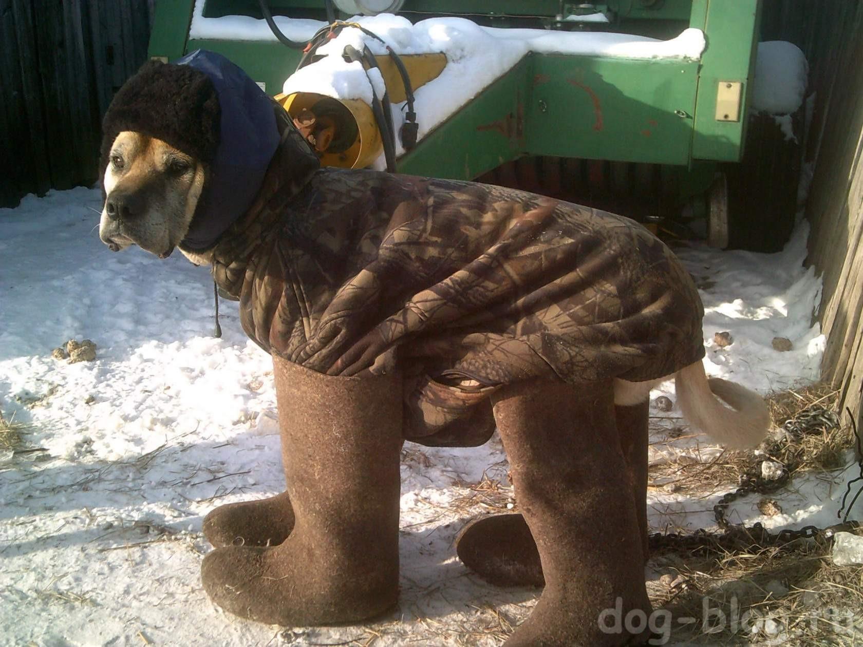 собака в валенках и шапке