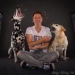 50 смешных фото, на которых собака ловит еду