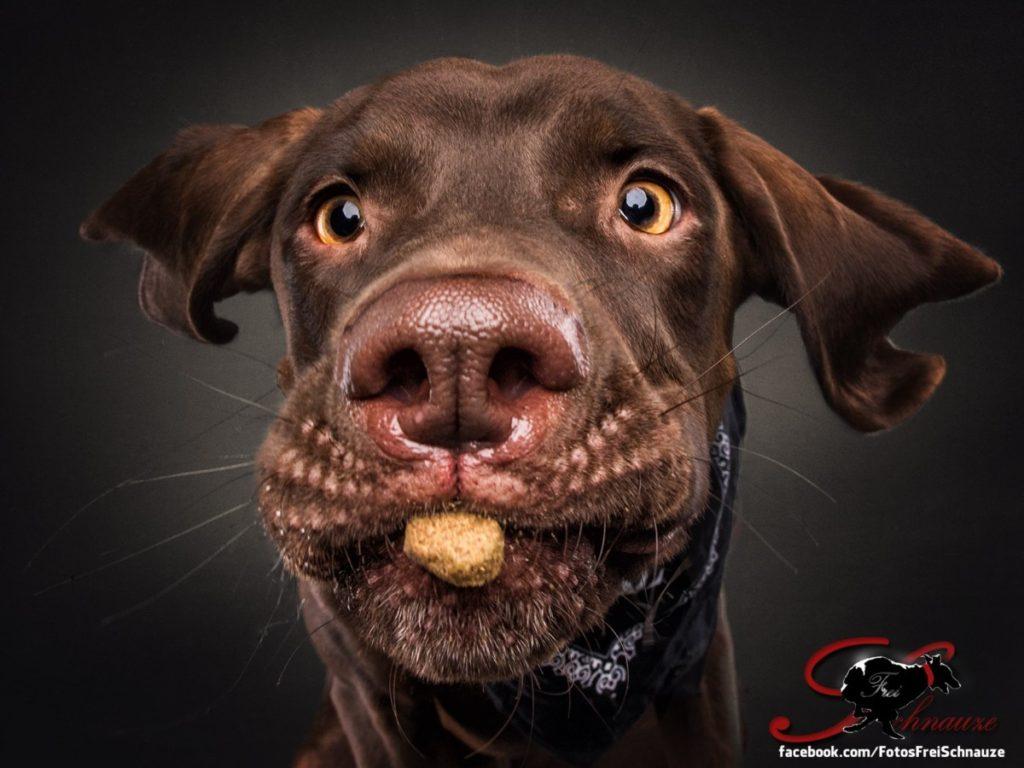 собака ловит еду