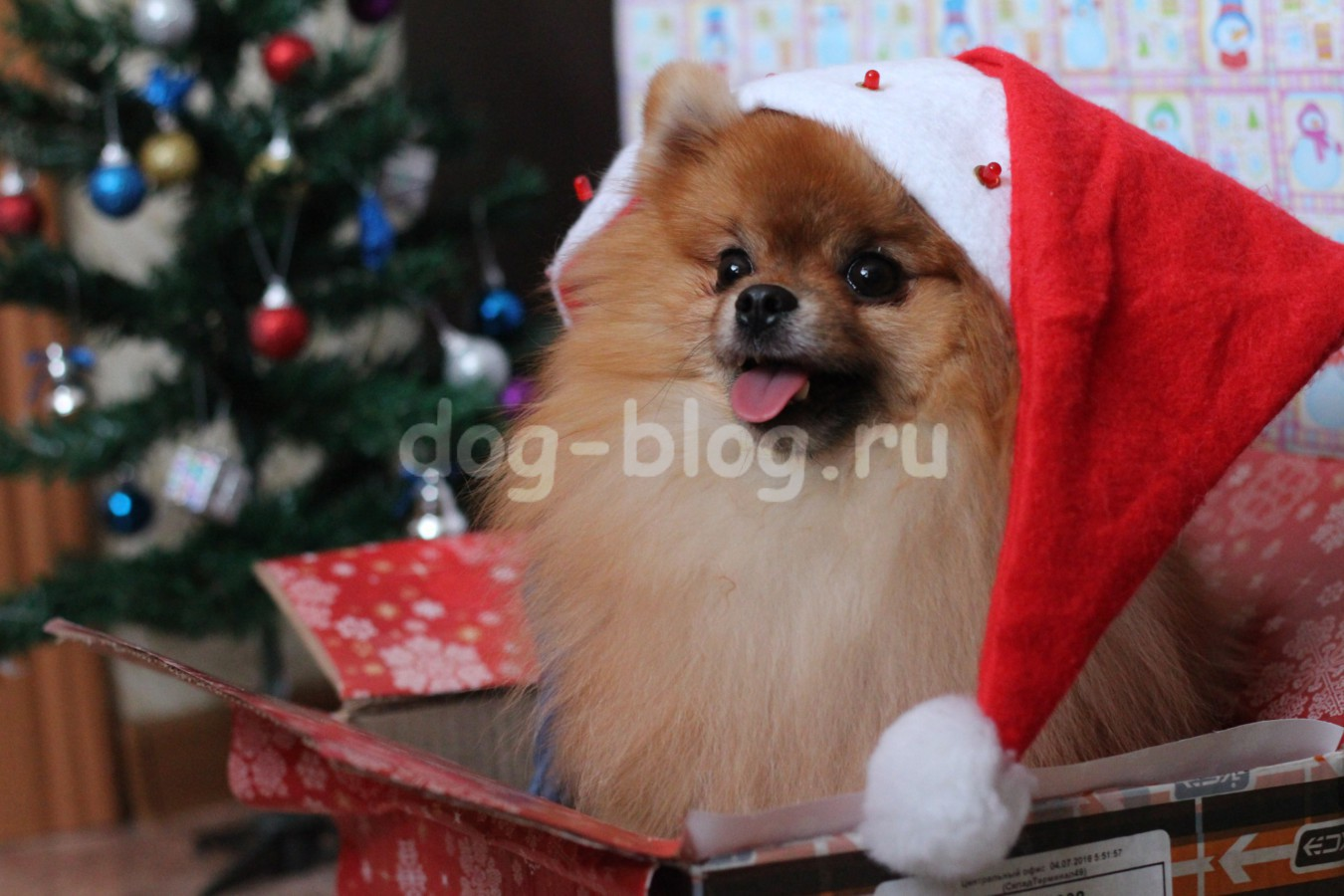 Собака Дед Мороз